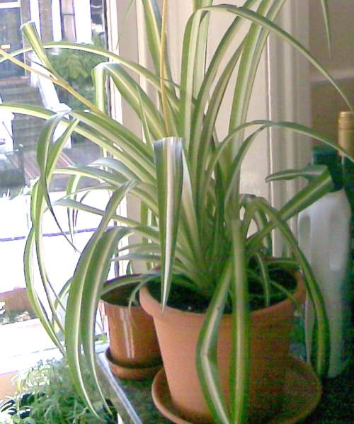 Kitchener Where To Purchase House Plants